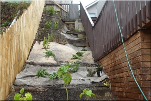 slope-carpet-and-bark